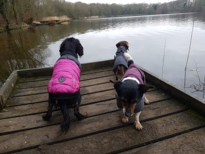 dog walking coate water swindon