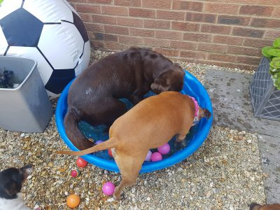 pool party time doggy day care swindon