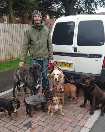 Group Dog walking by pitchers pet carer Swindon