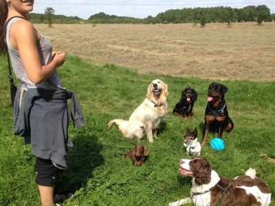 dog walking by pitchers pet carer Swindon