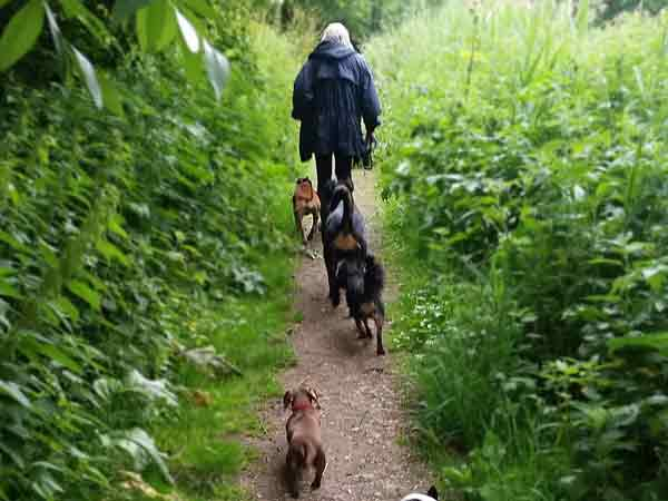 dog walking swindon wilts