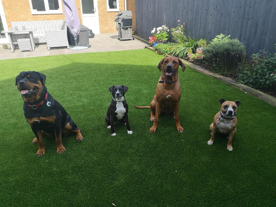 dog friends line up dog walking service swindon
