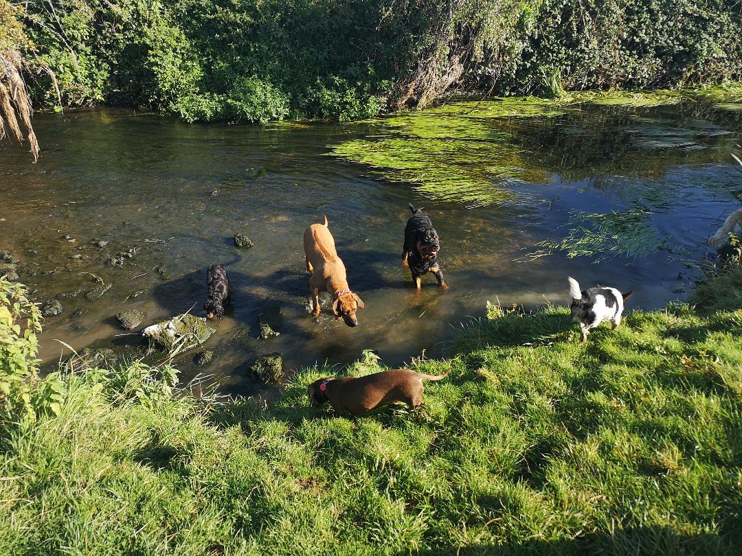 dog walking service swindon river