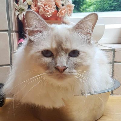 white cat laying in bowl